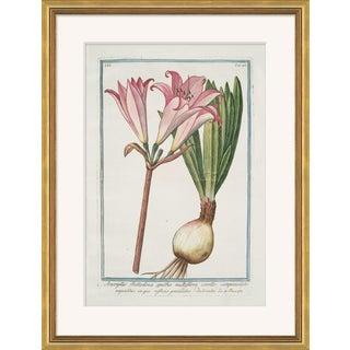 Hortus Romanus 1772-1793 XXI Framed Art Print For Sale