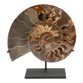 Decorative Mounted Ammonite Slice For Sale