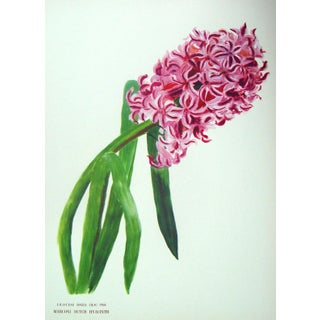 Vintage 1950s Hyacinth Offset Lithograph For Sale