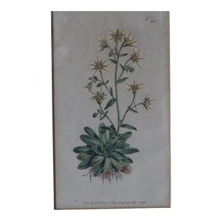 Yellow Hand-Colored Botanical Print