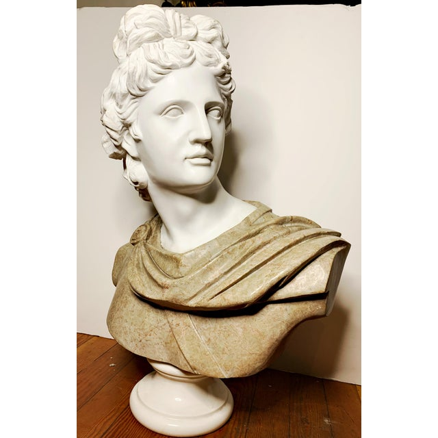 Early 20th Century Italian Marble Bust of Appollo Belvedere For Sale - Image 5 of 12
