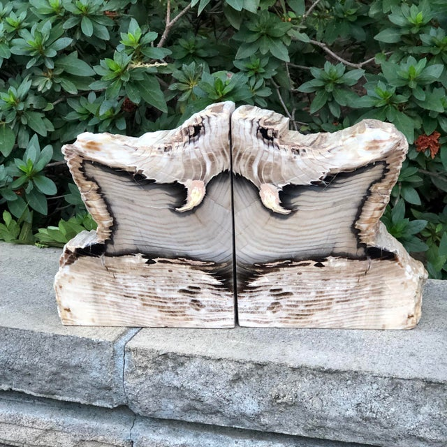 Fossilized Petrified Wood Bookends - a Pair For Sale - Image 10 of 10