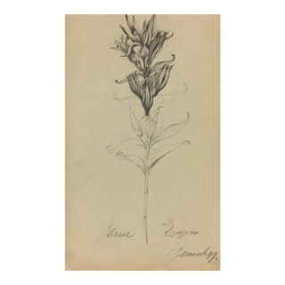 Flower Sketch - E. Wollenweber, 1890 For Sale