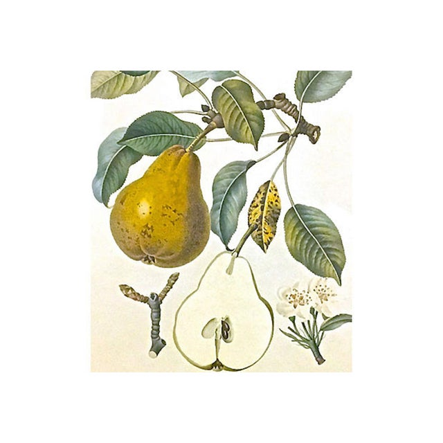 Rustic Late 20th Century Pear & Branch Engraving Print For Sale - Image 3 of 5