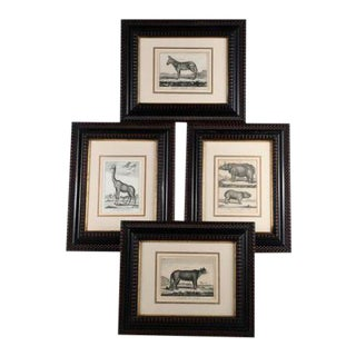 "Framed Engravings From Buffon's ""Histoire Des Animaux Quadrupedes"" - Set of 4 For Sale"