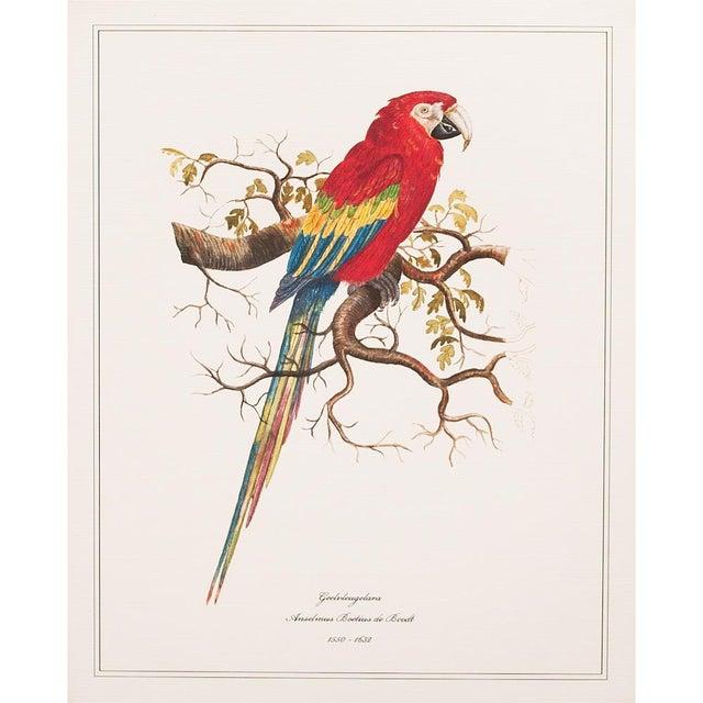 Set of 9 gorgeous reproduction prints after watercolors of Parrots & Parakeets by Anselmus Boëtius de Boodt (1550 - 1632),...