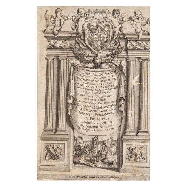 Illustration 17th Century Illustrated Vellum Book, Ulisse Aldrovandi's De Quadrupedibus Solidipedibus For Sale - Image 3 of 7