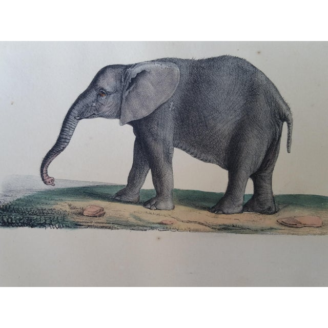 1829 Hand Painted Elephant Engravings - Image 4 of 6