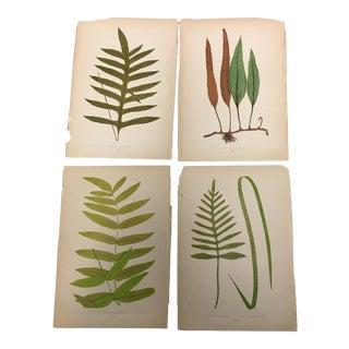 Antique Leaf Botanical Prints - Set of 4