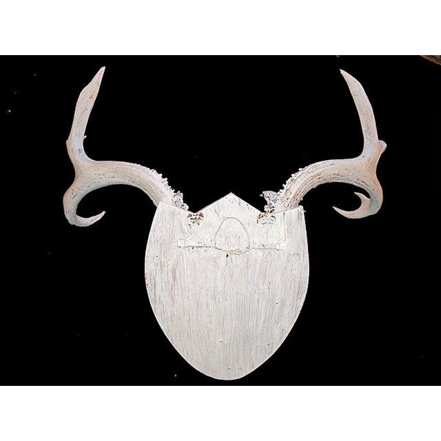 Mounted Deer Antlers - Image 3 of 5