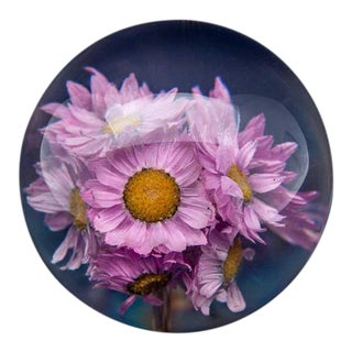 Natural Pink Rhodanthe Paperweight For Sale