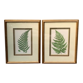 Framed 19th Century Fern Engravings - a Pair For Sale