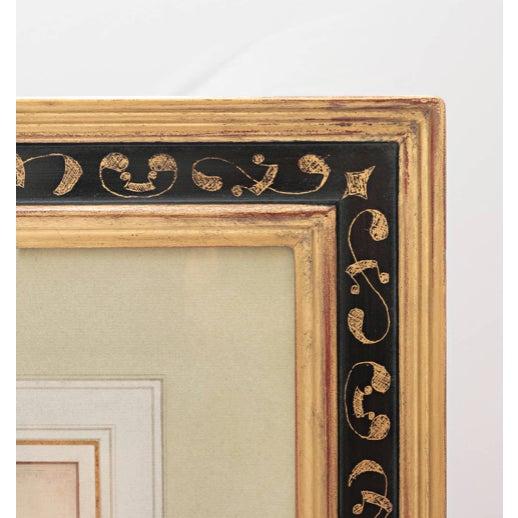 "17th Century Basil Besler ""Ornithogalum Spicatum"" Botanical Print For Sale - Image 5 of 7"