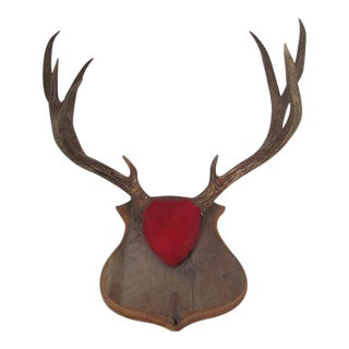 Cushion Mounted Antlers on Wood Shield For Sale
