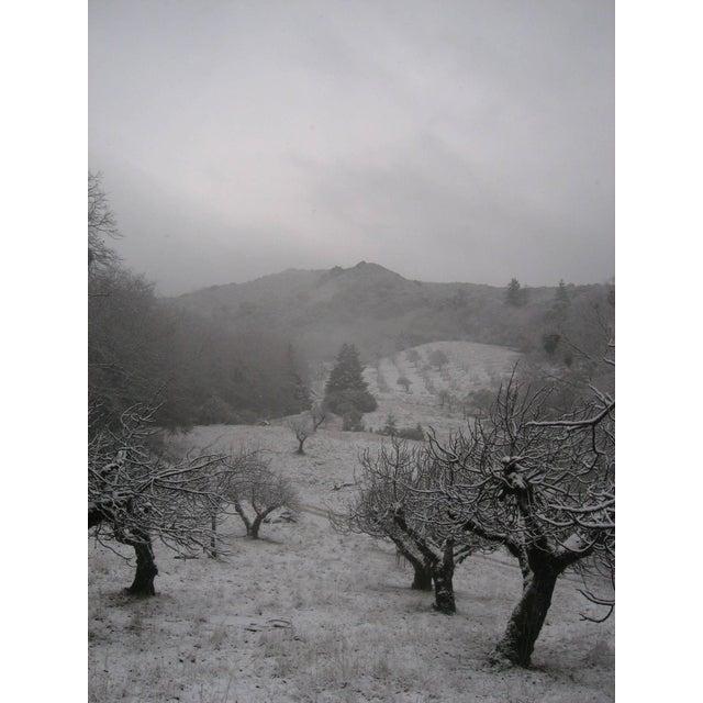 "2010s Gaétan Caron ""Orchard in Snow"" Framed Mendocino Photograph, 2010 For Sale - Image 5 of 5"