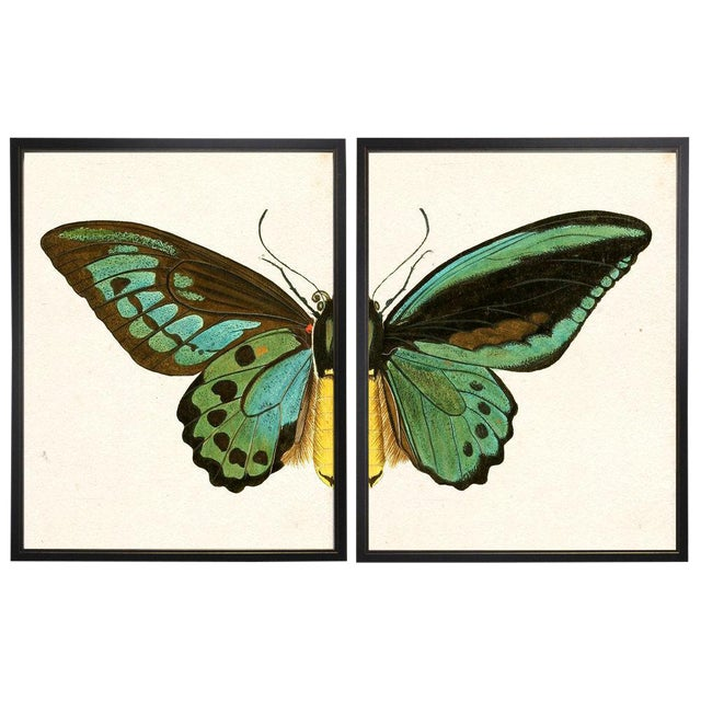 """Split Turquoise Butterfly Prints in Copper & Black Shadowboxes 46""""x29"""" - a Pair For Sale"""