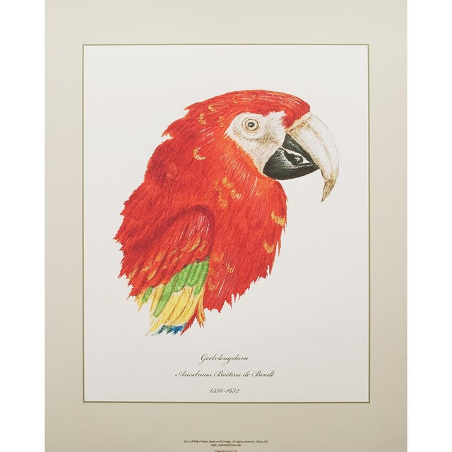A gorgeous set of six reproduction prints of Parrots Heads Studies. The Cockatoo print is after the original 18th century...