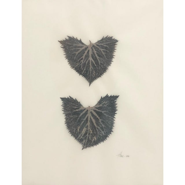 Five framed and glassed botanical prints. The leaves of each plant have been pressed and inked onto vellum, rubbed with...