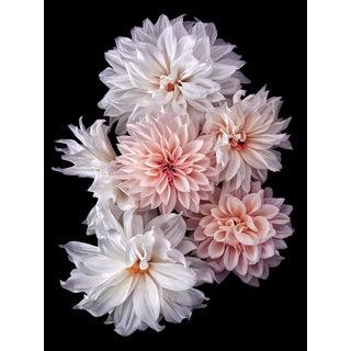 "Photographic Botanical Print, ""Fairytale"" Portrait by Artist Debi Shapiro For Sale"
