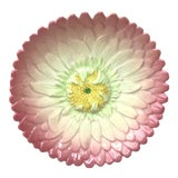 Image of Late 19th Century Majolica Pink Daisy Plate Delphin Massier For Sale