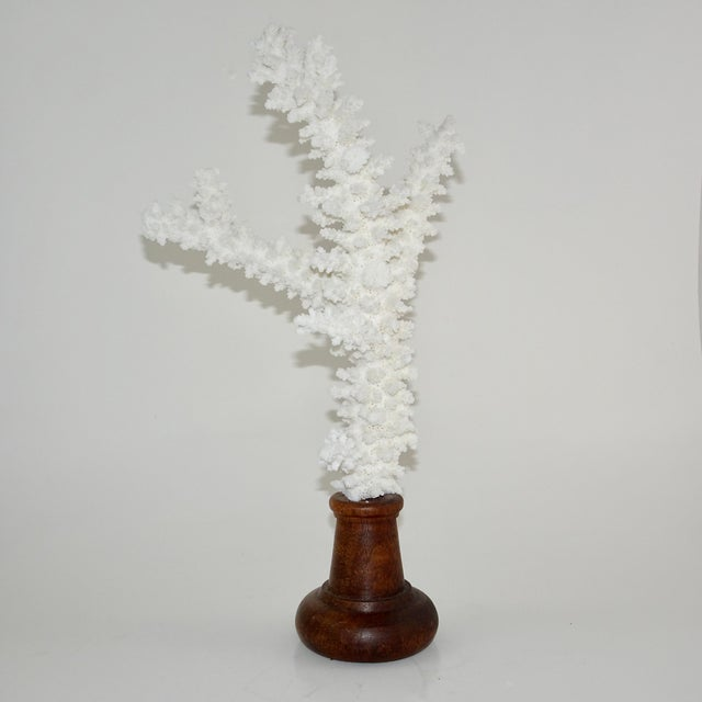 Contemporary White Coral Branches Mounted on Round Wood Bases - a Pair For Sale - Image 3 of 8