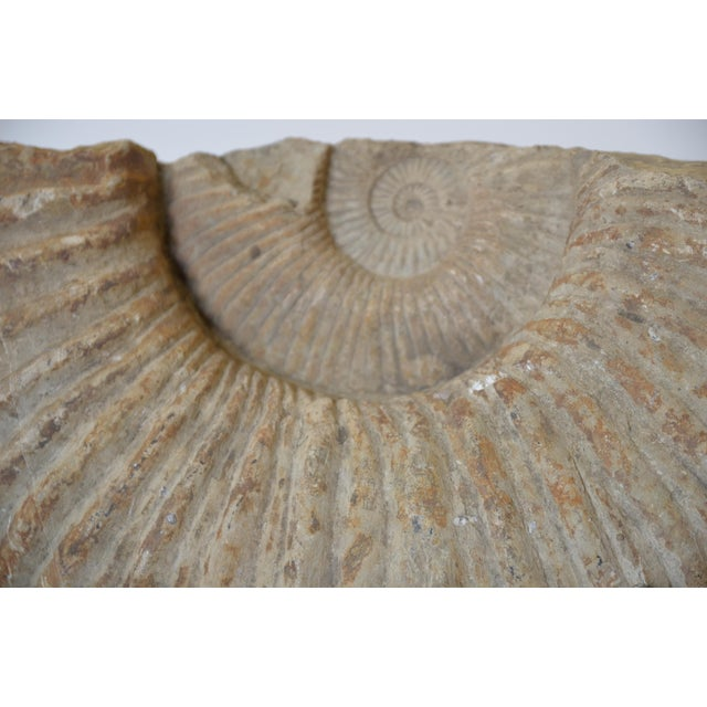 Iron Fossilized Ammonite on Custom Iron Stand For Sale - Image 7 of 10