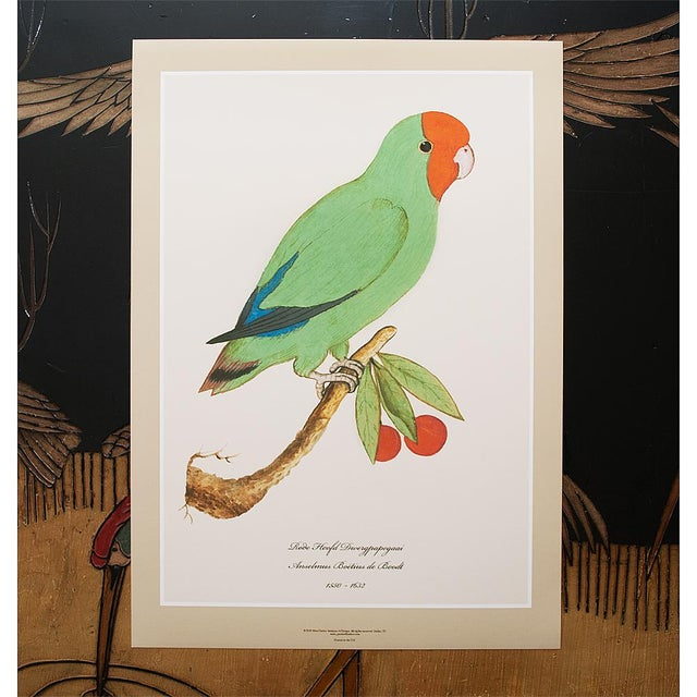 2010s 1590s Large Print of Red-Headed Lovebird by Anselmus De Boodt For Sale - Image 5 of 6