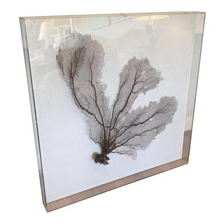 Sea Fan Coral Framed in Acrylic Box For Sale
