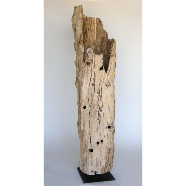 Naturally aged hollow tree trunk. To illuminate the interior, a light can be placed inside. Knots and holes and beautiful...