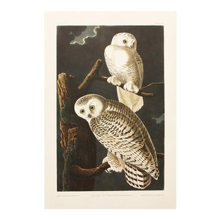1990s Snowy Owls by Audubon, Large Cottage Style Print For Sale
