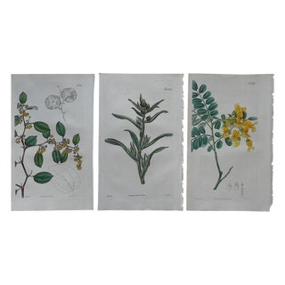 Antique Botanical Engravings - Set of 3 C. Early-Mid 1800's