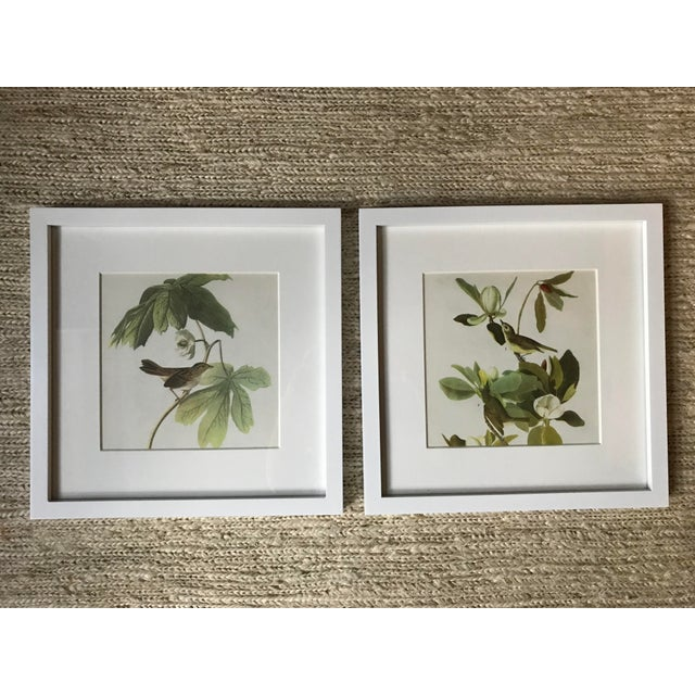 Framed Vintage Audubon Vireo Prints - a Pair For Sale - Image 9 of 9