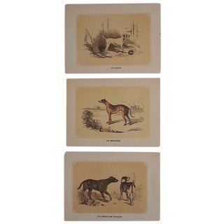 Antique Dog Lithographs - Set of 3 For Sale