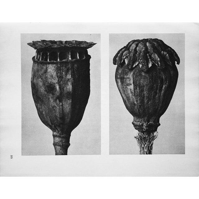 Black 1935 Karl Blossfeldt Photogravure N89-90 For Sale - Image 8 of 9