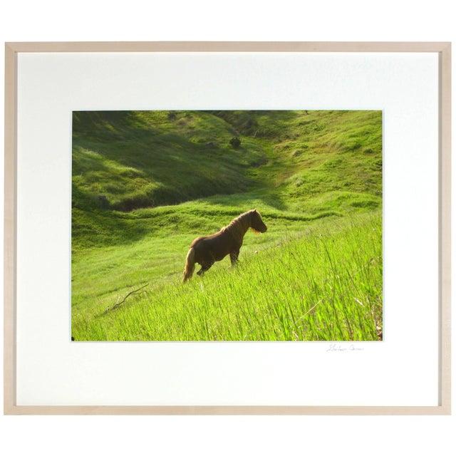 "Gaetan Caron Gaétan Caron ""Stallion in Green Meadow"" Mendocino, Ca 2010 For Sale - Image 4 of 5"