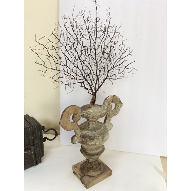Antique Italian Silvered Wood Urn With Sea Fan For Sale In San Francisco - Image 6 of 8