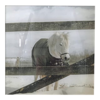 Acrylic Mounted Snowy Horse Photograph For Sale