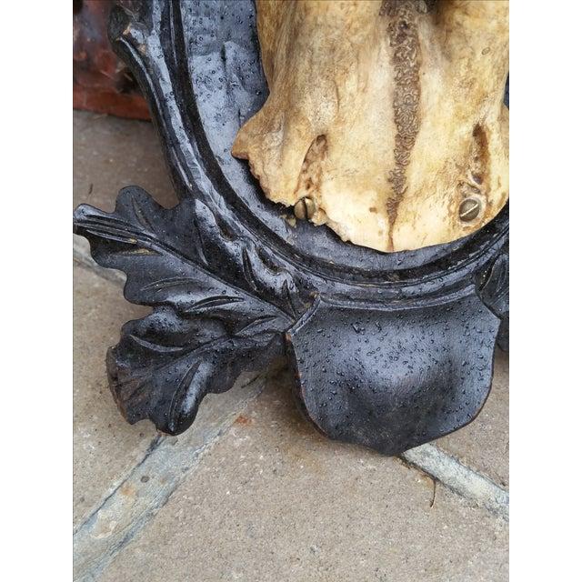 Black Forest Deer Antler Trophy - Image 4 of 4