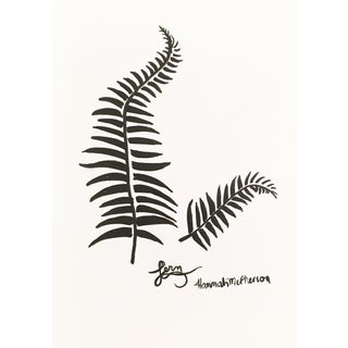 Fern Original Drawing by Hannah McPherson For Sale