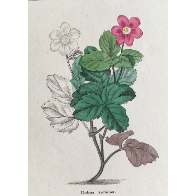 1853 the Botanic Garden by Benjamin Maund Print For Sale - Image 4 of 8