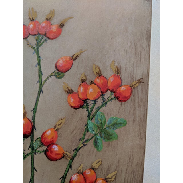 This is a botanical, oil on paper painting by Edith Brunning dated 1960. This is one of several in a series of paintings...