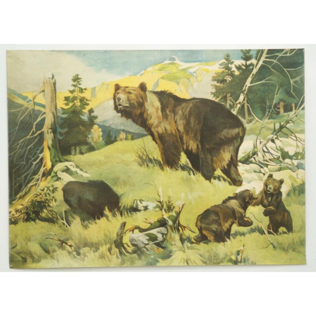 This wall chart depicts a bear family was drawn by Franz Roubal in the 1930s and published by Leipziger Schulbildverlag....