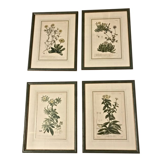 18th C. Botanical Engravings - Set of 4 For Sale