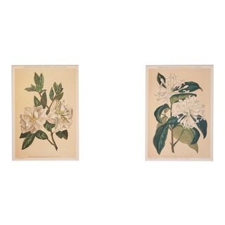 1880s Antique French Botanical Chromolithographs, Set of 2,Matted For Sale