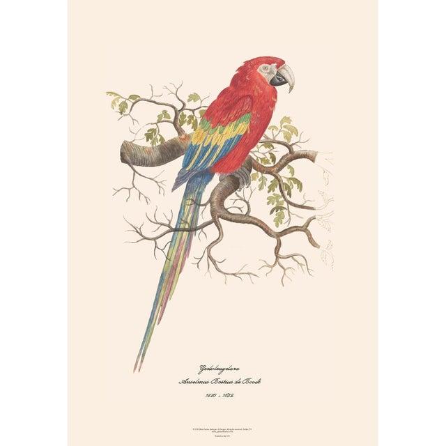 XL 1590s Contemporary Prints of Anselmus Boëtius De Boodt Parrots - Set of 4 For Sale - Image 4 of 7