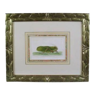 Late 18th Century Grasshopper English Engraving by Nodder For Sale