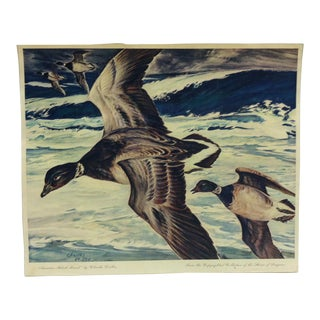 "1960s Vintage ""American Black Brant"" Charles De Feo Color Print For Sale"