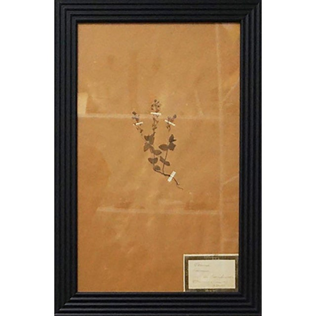 French Framed Botanicals - Set of 8 For Sale In Palm Springs - Image 6 of 10
