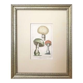 19th C. Italian Poisonous Mushroom Botanical Engraving 1835 Hand Colored