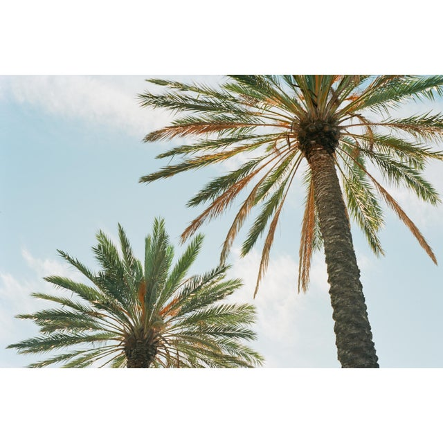 Dreaming of the sun and cool breezes in this Socal Palm Tree View. High Quality 16x24 Print.